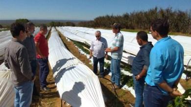 Photo of Chapada: Governo estadual busca alianças produtivas para agricultura familiar em Morro do Chapéu