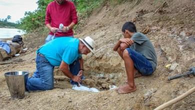 Photo of #Brasil: Criança de 11 anos descobre fóssil de réptil pré-histórico no interior do Acre