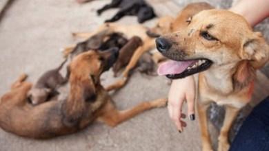 Photo of Chapada: Doze cães são encontrados mortos em Ruy Barbosa; polícia investiga morte por envenenamento