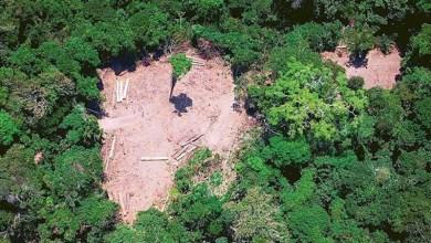 Photo of #Brasil: Congresso Nacional pode liberar fazendas para desmatar até 50% de terras na Amazônia