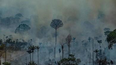 Photo of #Brasil: Governo libera R$ 38 milhões que estavam bloqueados para combate a incêndios na Amazônia