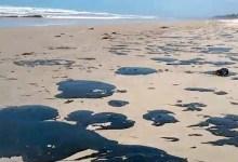Photo of Governo federal investiga navios que podem ser origem do óleo que polui praias brasileiras