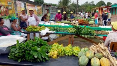 Photo of Chapada: Exposição em Livramento de Nossa Senhora terá feira da agricultura familiar no final de semana