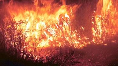 Photo of #Bahia: Incêndio de grandes proporções destrói vegetação na região do município de Brejões
