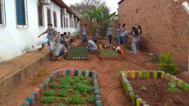Photo of Chapada: Educandário Rômulo Galvão desenvolve projeto de horta em Nova Redenção