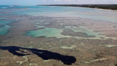 Photo of #Brasil: Estudo mostra que peixe de áreas atingidas por óleo pode ser consumido