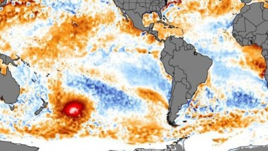 Photo of #Mundo: 'Mancha quente' que percorre oceanos intriga cientistas na Nova Zelândia