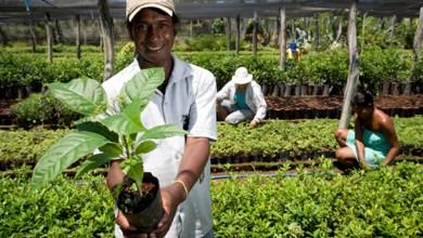 Photo of #Brasil: Produtores agrícolas do país são em sua maioria pretos ou pardos, segundo pesquisa do IBGE de 2017