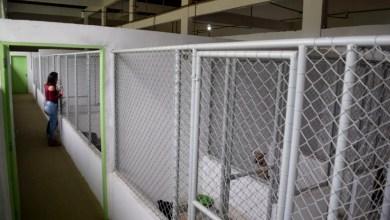 Photo of Chapada: Centro de referência em acolhimento de animais de rua é instalado no município de Jacobina