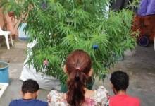 Photo of #Brasil: Polícia encontra pés de maconha enfeitados como árvores de Natal no Espírito Santo