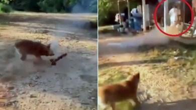 Photo of #Mundo: Cachorro lança fogo de artifício em donos que acenderam explosivos perto dele; veja fotos