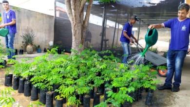 Photo of Chapada: Viveiro de mudas nativas para o reflorestamento é ampliado por estudantes de Morro do Chapéu