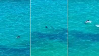 Photo of #Vídeo: Moradora grava imagens de golfinhos em praia do Rio Vermelho em Salvador; veja aqui