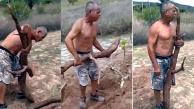 Photo of Chapada: Agricultor do município de Jacobina colhe mandiocas gigantes; veja o vídeo