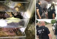 Photo of #Brasil: Cães são encontrados por policiais civis congelados em freezer no Rio Grande do Sul
