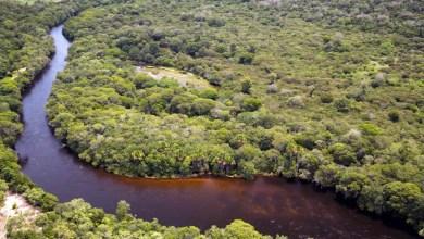 Photo of Bahia cria mais sete Reservas Particulares do Patrimônio Natural e dobra o número no estado