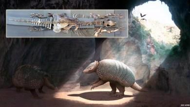 Photo of Chapada: Ossada encontrada em caverna de Iramaia é de nova espécie de tatu gigante pré-histórico