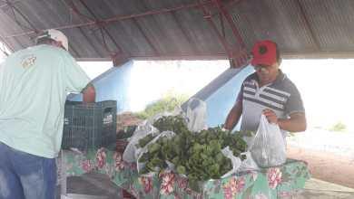 Photo of #Bahia: Feiras livres e mercados municipais funcionam com cuidados e medidas de higiene contra a Covid-19