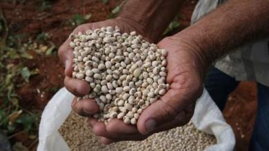 Photo of Em março, IBGE estima crescimento de 5% da produção de grãos na Bahia para 2020