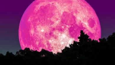 Photo of #Mundo: Exibindo uma brilhante cor rosa, a Superlua estará mais próxima da Terra nesta terça