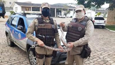 Photo of #Chapada: Policiais militares resgatam jiboia próximo ao aeroporto do município de Jacobina
