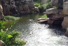 Photo of #Chapada: Revitalização do Rio Salitre será viabilizada com mais de R$8 milhões; bacia nasce em Morro do Chapéu