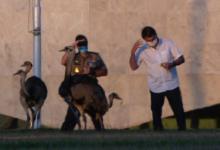 Photo of #Fotos: Isolado no Alvorada com covid-19, presidente Bolsonaro tenta alimentar ema, mas é bicado pelo animal