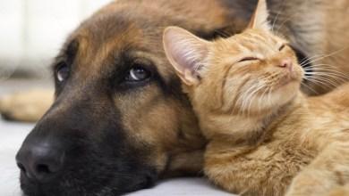 Photo of #Chapada: Itaberaba vai ganhar 'canil' e 'gatil' e propõe política de castração e cuidados com animais abandonados