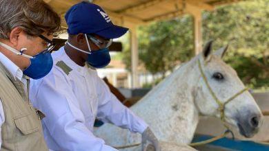 Photo of #Brasil: Soros produzidos por cavalos têm anticorpos potentes para covid-19, aponta especialista
