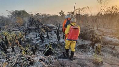 Photo of #Chapada: Brigada que atuou na frente de combate a incêndios em Andaraí e Mucugê encabeça campanha para novos equipamentos