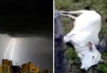 Photo of #Bahia: Mais de 100 mil raios caíram em 24h no estado; fazenda pega fogo no oeste e animais morrem no sul