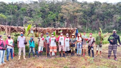 Photo of #Chapada: Movimento Sem Terra planta árvores em homenagem a vítimas da covid-19 em municípios da região
