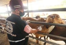 Photo of #Bahia: Estado deve vacinar 3,5 milhões de animais contra a febre aftosa até o fim de novembro