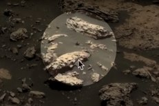 """""""Encontrei essa estranha criatura com tentáculos em uma foto de Marte"""", relata o caçador   FOTO: Divulgação  """