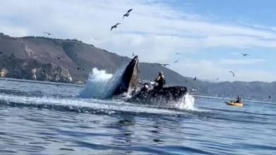 Photo of #Vídeo: Imagens mostram momento exato que mulheres entram na boca de uma baleia durante passeio na Califórnia