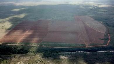 Photo of #Chapada: Quase mil hectares já foram desmatados por empresa com licença irregular no município de Piatã