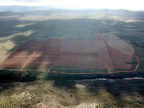O desmatamento acontece devido a licença dada pelo governo estadual | FOTO: Divulgação |