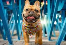 Photo of #Brasil: País registra primeiros casos do novo coronavírus em cachorros no estado do Paraná