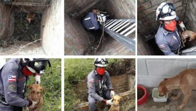 Photo of #Chapada: Equipes do 11º Grupamento de Bombeiros resgatam cachorro de buraco de três metros em Itaberaba