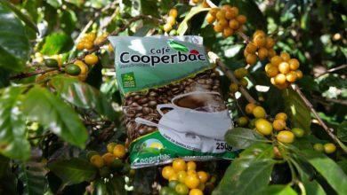 Photo of #Bahia: Cooperativa da agricultura familiar aposta em segmentação de público para se estabelecer no mercado de café