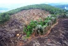 Photo of #Brasil: 56 mil hectares destruídos com desmatamento na Amazônia em abril; é recorde da série histórica para o mês