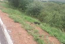 Photo of #Chapada: Corpo é encontrado às margens de rodovia no município de Tanhaçu; homem ainda não foi identificado