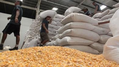 Photo of #Chapada: Itaberaba recebe 100 toneladas de milho para comercialização em Programa de Vendas em Balcão