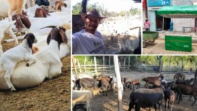 Photo of #Chapada: Com apoio do governo, criadores de caprinos e ovinos de comunidade em Ituaçu dobram valor de venda dos animais