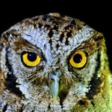 campanha de monitoramento de fauna em Umburanas 1