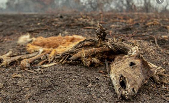 Área do Pantanal atingida por incêndios pode levar até 50 anos para se regenerar