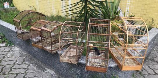 Pássaros da fauna silvestre brasileira são resgatados de cativeiro em Teresópolis