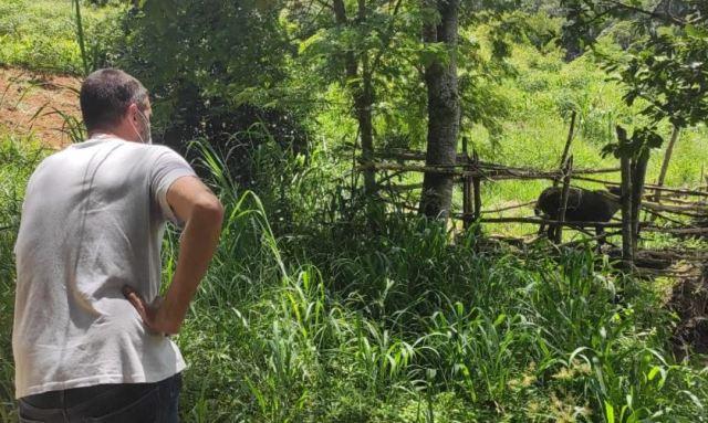 Após denúncia, Cobea flagra animais em condições precárias em sítio de Itaipava