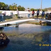 Mafra | Evolução da Covid-19 no concelho leva ao encerramento da Mata Paroquial da Malveira