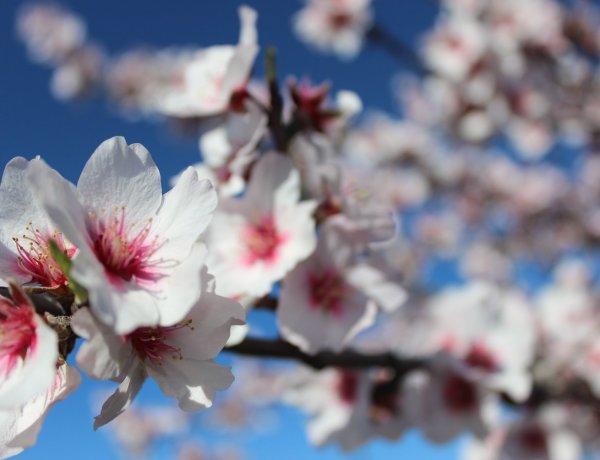 PP Amendoeiras em Flor 2019 (1)
